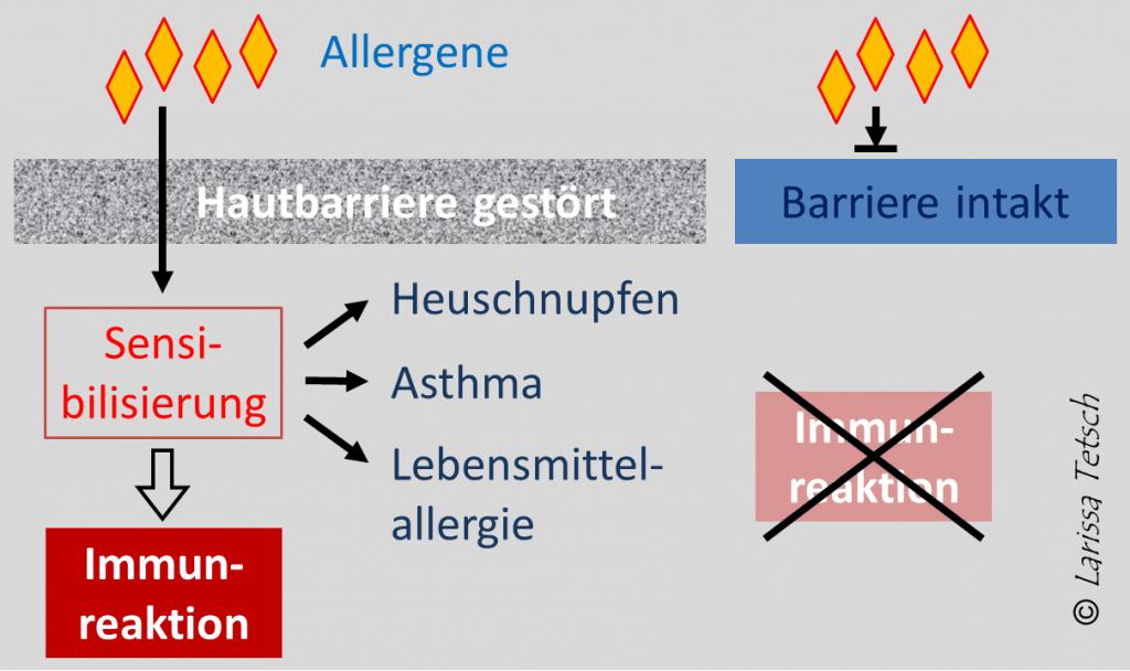 entstehung allergie
