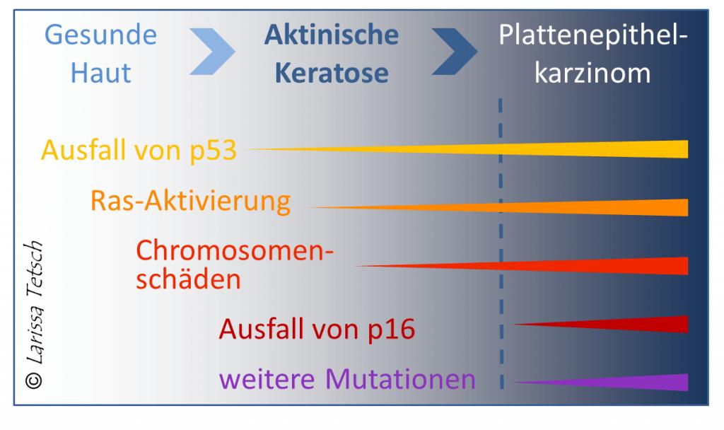 Entstehung aktinische Keratose