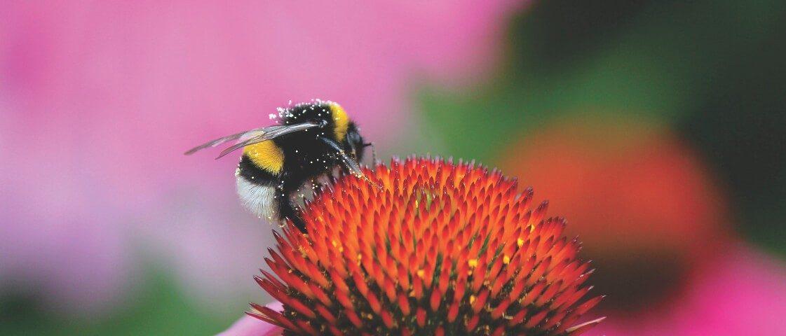 Honig - antibakteriell, antientzündlich und wundheilungsfördernd