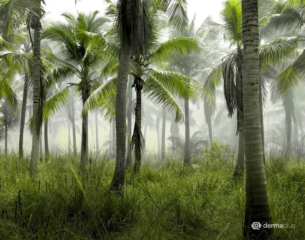 Palmen Palmöl
