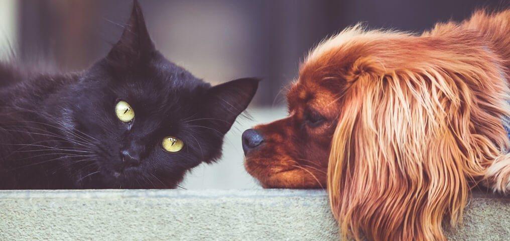 Zoonosen Hund Katze